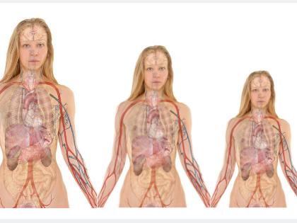 La peau, l'organe le plus important